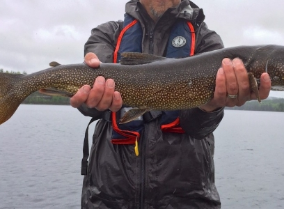 Lake trout at Blue Fox Camp
